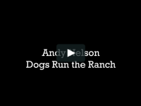 Andy Nelson Dogs Run the Ranch